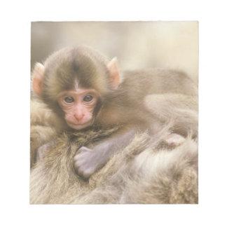 Japan, Nagano, Jigokudani, Snow Monkey Baby, Notepad
