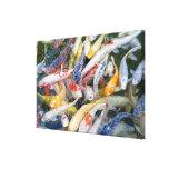 Japan, Tokyo, close-up swimming fish Canvas Prints