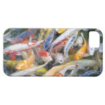 Japan, Tokyo, close-up swimming fish iPhone 5 Case