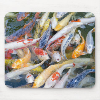 Japan, Tokyo, close-up swimming fish Mouse Mat