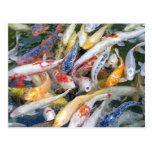 Japan, Tokyo, close-up swimming fish Postcard