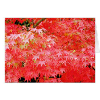 Japanes Red Maple Greeting Card