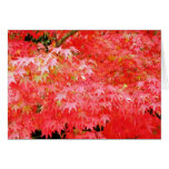 Japanes Red Maple Note Card