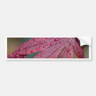 Japanese acer with raindrops bumper sticker