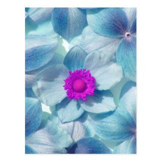 Japanese Anemonenblüten coloured digitally Postcard