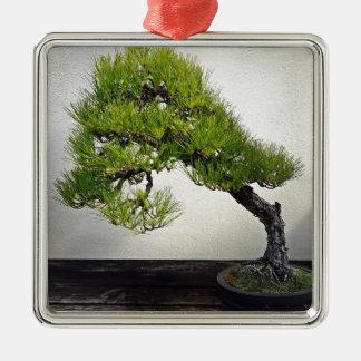 Japanese Black Pine Bonsai Silver-Colored Square Decoration