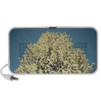 Japanese Blossom Tree iPod Speakers