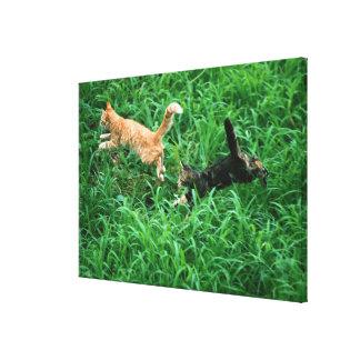 Japanese Cat 3 Canvas Print