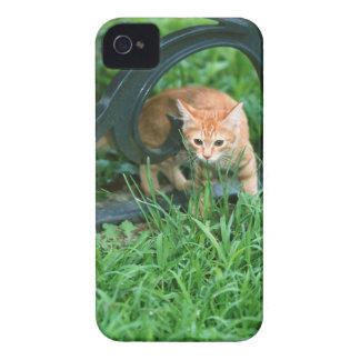 Japanese Cat 3 Case-Mate iPhone 4 Case