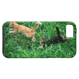 Japanese Cat 3 iPhone 5 Case