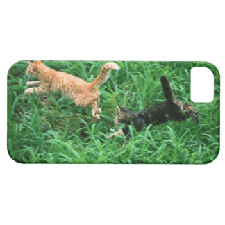 Japanese Cat 3 iPhone 5 Case
