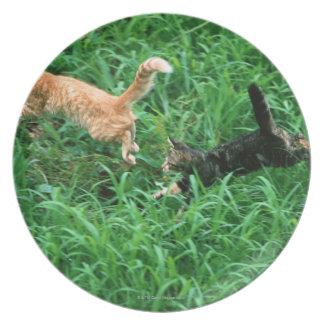 Japanese Cat 3 Plate