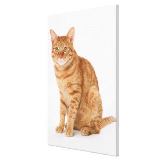 Japanese Cat 6 Canvas Print