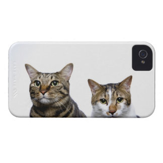 Japanese cat and Manx cat on white background iPhone 4 Case-Mate Case