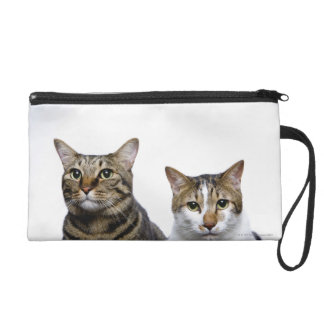 Japanese cat and Manx cat on white background Wristlet