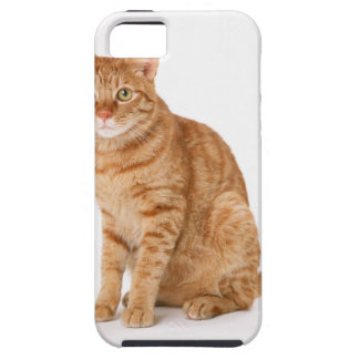 Japanese Cat iPhone 5 Cover