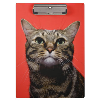 Japanese cat looking up clipboard