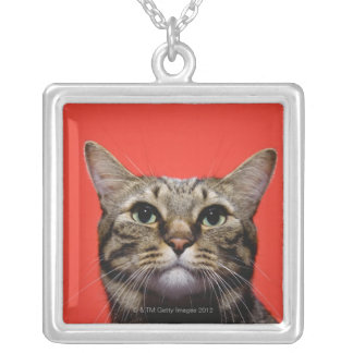 Japanese cat looking up silver plated necklace