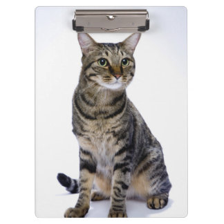 Japanese cat on white background clipboard
