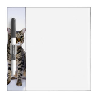 Japanese cat on white background dry erase board