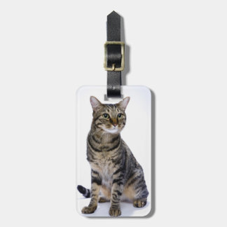 Japanese cat on white background luggage tag