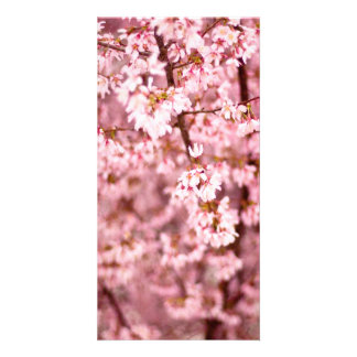 Japanese Cherry Blooms Customized Photo Card