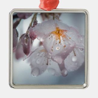 Japanese Cherry Blossom after the rains Silver-Colored Square Decoration