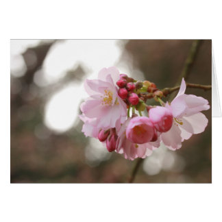 japanese cherry blossom in the light card