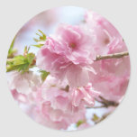 Japanese cherry blossoms 丸形シール・ステッカー
