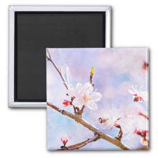 Japanese Cherry - Sakura In Bloom Square Magnet
