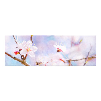Japanese Cherry - Sakura In Bloom Art Photo