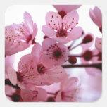 Japanese Cherry Tree Blossoms Square Sticker