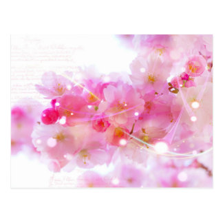 Japanese Cherry Tree with Pastel Pink Blossoms Postcards