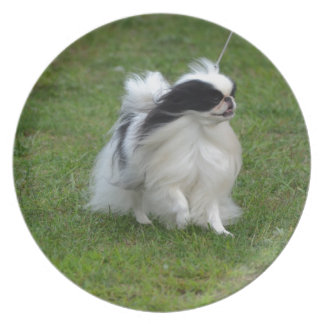 Japanese Chin Party Plates
