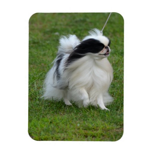 Japanese Chin Flexible Magnet