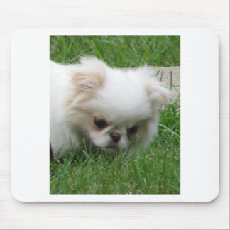 Japanese Chin Puppy 2.png Mouse Pad