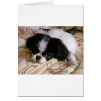 Japanese_chin puppy card