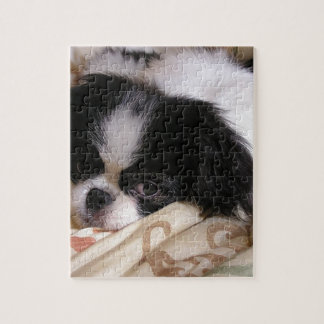 Japanese_chin puppy.png jigsaw puzzle