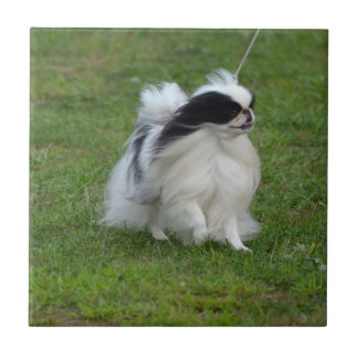 Japanese Chin Small Square Tile
