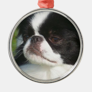 "Japanese Chin ""Wiggles"" ornament"