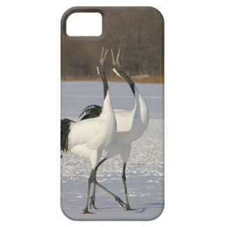 Japanese Cranes dancing on snow Barely There iPhone 5 Case