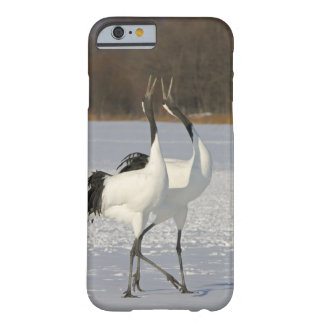 Japanese Cranes dancing on snow Barely There iPhone 6 Case