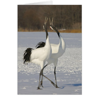 Japanese Cranes dancing on snow Card