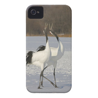 Japanese Cranes dancing on snow Case-Mate iPhone 4 Case
