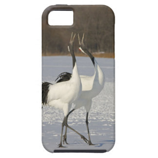 Japanese Cranes dancing on snow iPhone 5 Case