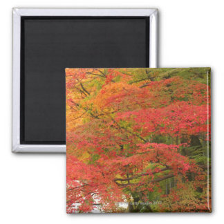 Japanese Fall Foliage Magnet