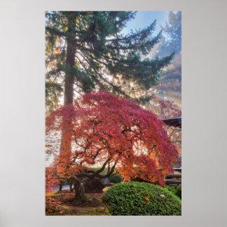 Japanese Gardens In Autumn In Portland, Oregon 6 Poster