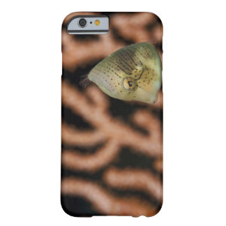 Japanese inflator filefish (Brachaluteres Barely There iPhone 6 Case