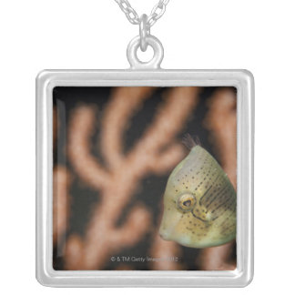Japanese inflator filefish (Brachaluteres Silver Plated Necklace