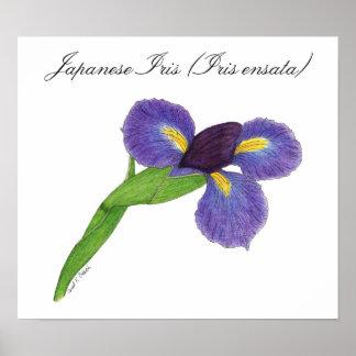 Japanese Iris Blossom Poster